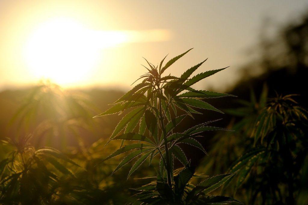 acheter cannabis légal